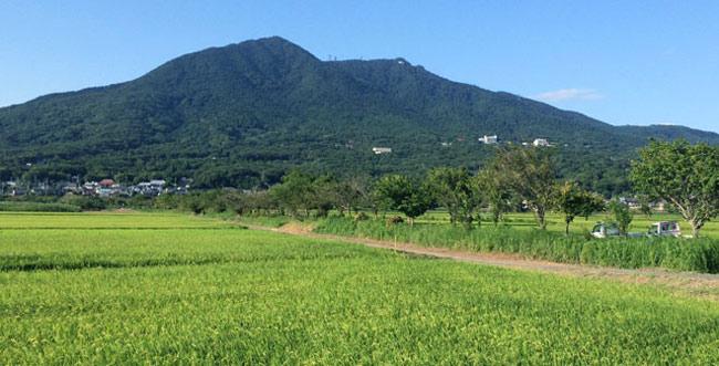 大豆栽培の歴史と稲との関わり